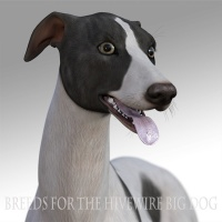 Breeds for the HW Dog - Greyhound
