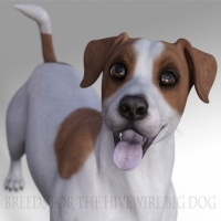 Breeds for the HW Dog - Jack Russell