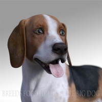 Breeds for the HW Dog - Beagle